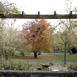 Seasons (autumn)